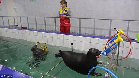 Pinnipeds could be show animals ~ but in PUtin's Russia - they are different