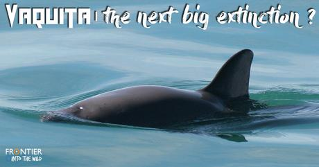 Vaquita: The Next Big Extinction?
