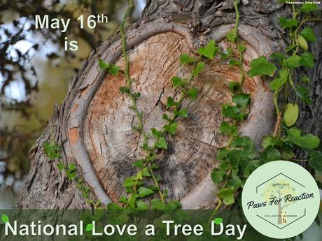 #Plant some #trees on #NationalLoveATreeDay #May16 #TreeEra #Coupon