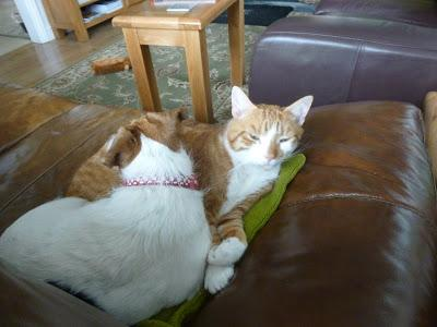 Ginger and Mavis Caught Napping