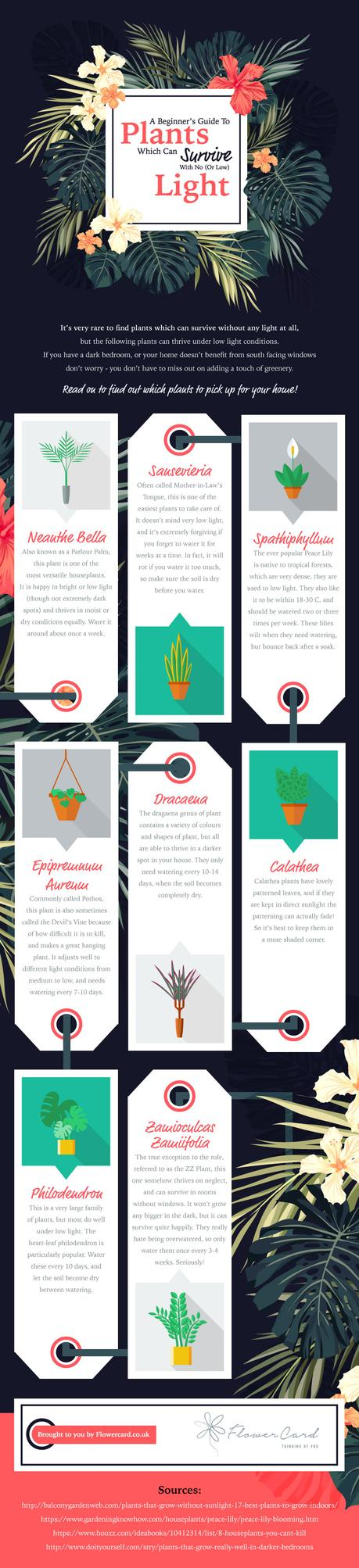 low-light plants infographic