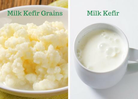 milk kefir grains and milk kefir compared