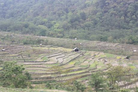 DAILY PHOTO: Khonoma Terraces