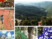 Places Shimla Must Visit