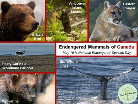Endangered animals of Canada National Endangered Species Day
