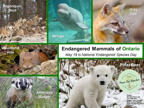 #NationalEndangeredSpeciesDay #May19 #Endangered #Animals of #Canada