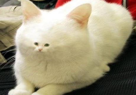 Top 10 Cats Born With Unusual Birth Defects and Fur Markings