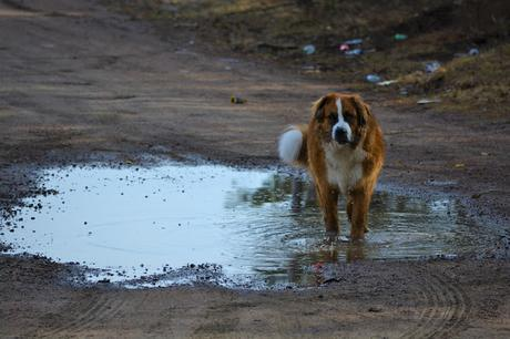How to prepare your pets for natural disaster: Climate change increases likelihood of disasters for the entire family