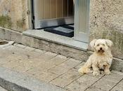(Even More) Diminutives Portugal