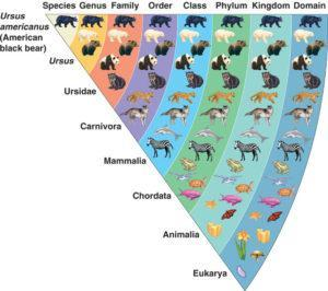 Is there evolution between kinds?