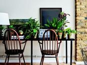 Definitive Guide House Plants
