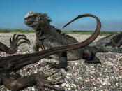 Warming Planet Jolts Iconic Creatures Galápagos