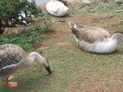 DAILY PHOTO: Scenes from Ward's Lake, Shillong