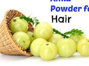 Amla Powder Benefits Hair