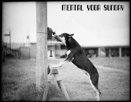 Police Dog, Tess, January 29, 1935 by Sam Hood