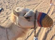 DAILY PHOTO: Camel Nose Koozy