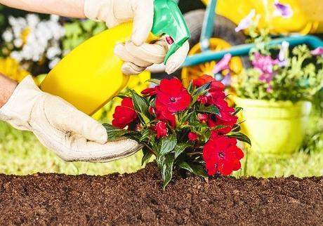 Key Tips On How To Start Your Backyard Landscaping By Yourself