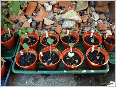 Potting-up the PSB