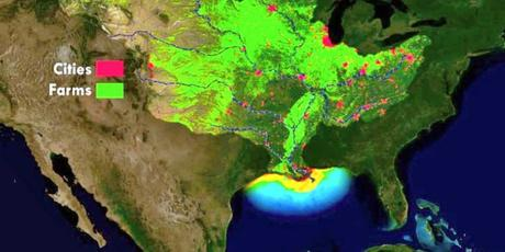 This Summer's Gulf 'Dead Zone' Could Be Bigger Than Connecticut