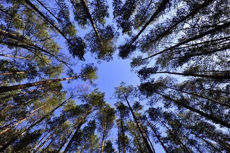 forests-sky-foliage