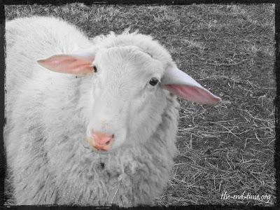 Do the sheep REALLY know what the Shepherd does for them?