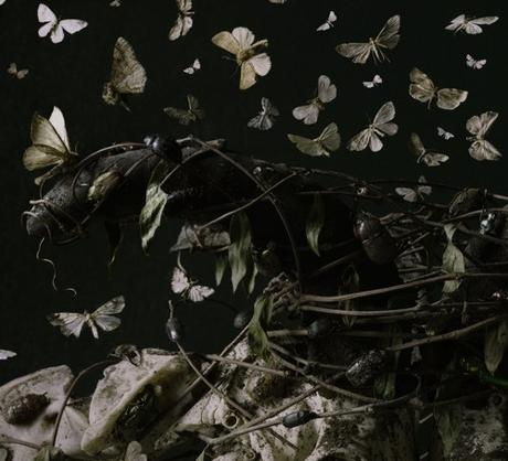 Boston Artist Tara Sellios Moth Photo