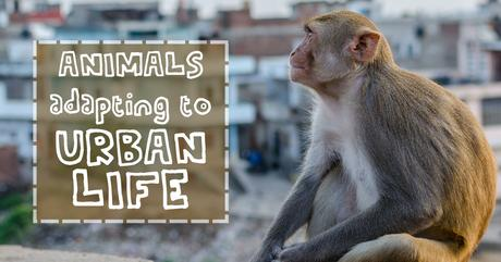 Animals Adapting to Urban Life