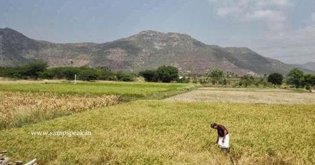 MP man preserves local varieties of rice