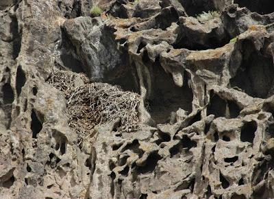 Lace Curtain in the Desert
