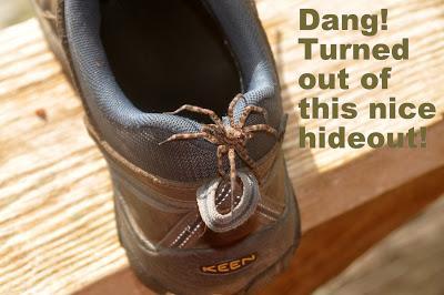 Not So Itsy Bitsy Spider