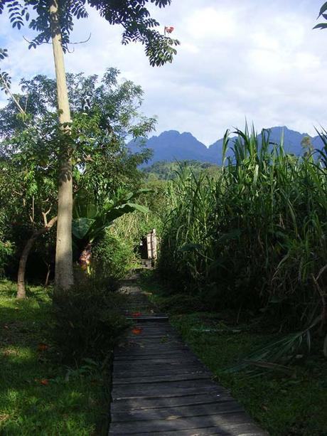 Sunlight boardwalk Ruboni Camp. Outline Rwenzori Mountains