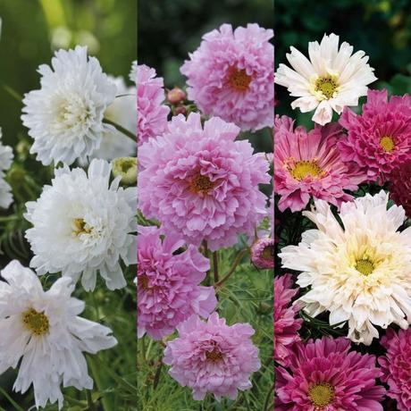 Decorate Your Garden With Some Beautiful Eye Catchy Flowers