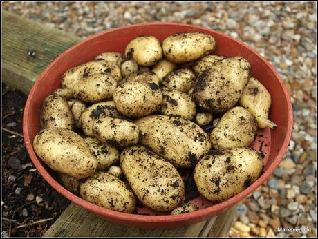 A comparison of some Early potatoes