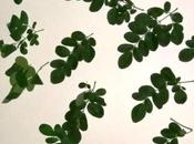 Recipe: Moringa Rice World Goodness