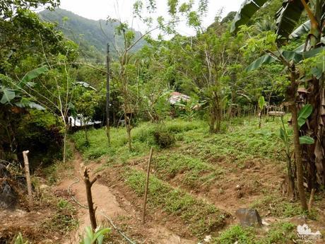 Tabunan farm