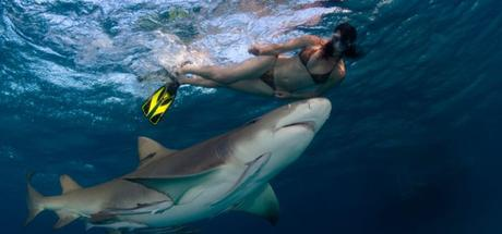 12 Things More Likely to Kill You Than a Shark4 min read