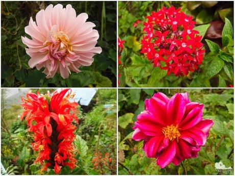 Wild flowers in Balamban