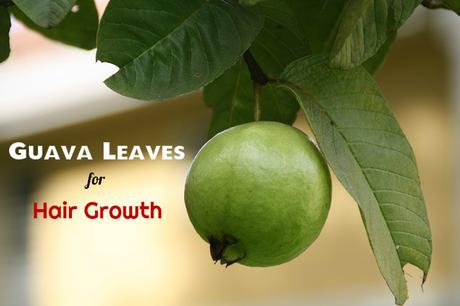 Guava Leaves for Hair
