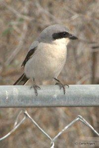 Birds of Dewey-Humboldt, Arizona Wins Gold