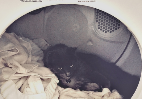 cat in dryer