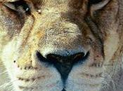 Exotic Animals Vacation: Seeing Wildlife Ethical Way2 Read