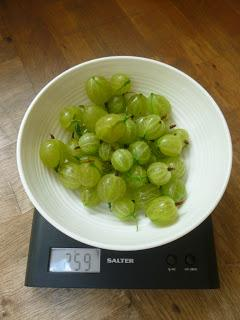 Getting the Gooseberry Harvest In