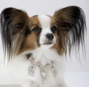 Diamond Dog Collars, Diamonds for Dogs