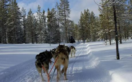 dog sledding iso syote_back view
