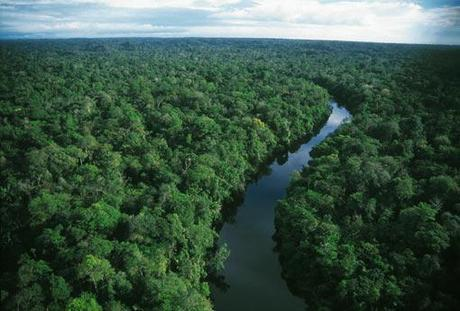 You Can Now Stroll Through Amazonian Rainforest on Your Desktop; Good or Bad?