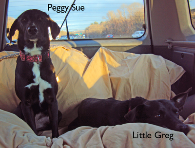 Car travel with dogs (guest post)
