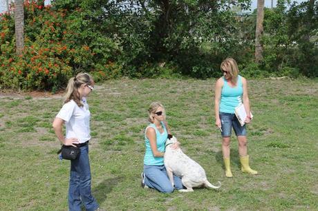 Big Dog Ranch Rescue, BDRR, Raymond Lee Jewelers