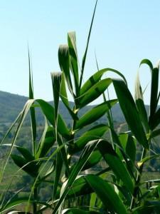 EPA Closer to Approving 15 percent Ethanol-Gasoline Blend