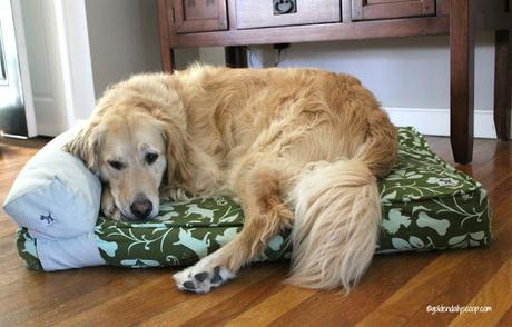 eco-friendly molly mutt dog beds review and giveaway