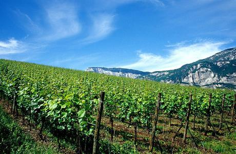 From Italy with Wine - Wine production process